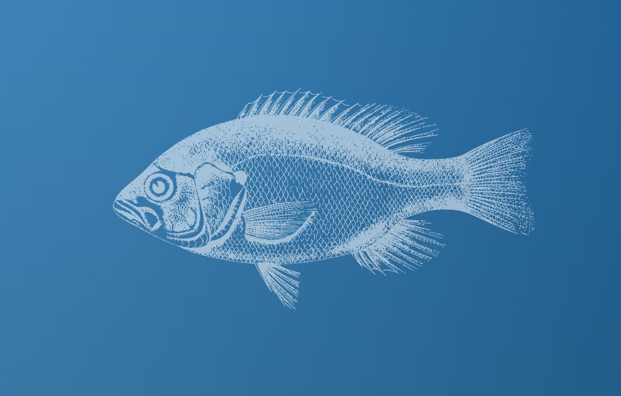 Piatkowe-ryby-header
